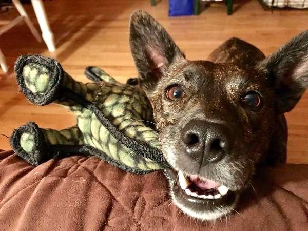 Des Moines Chiropractor's Dog